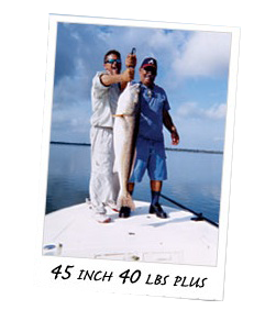 40lb fish on The Mosquito Lagoon